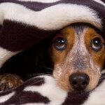 Seu Cachorro Tem Medo De Fogos? Eis a Solução!