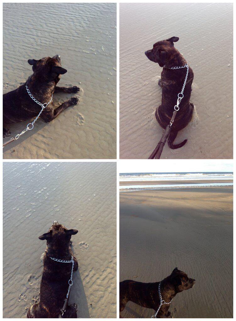 viajar cachorro