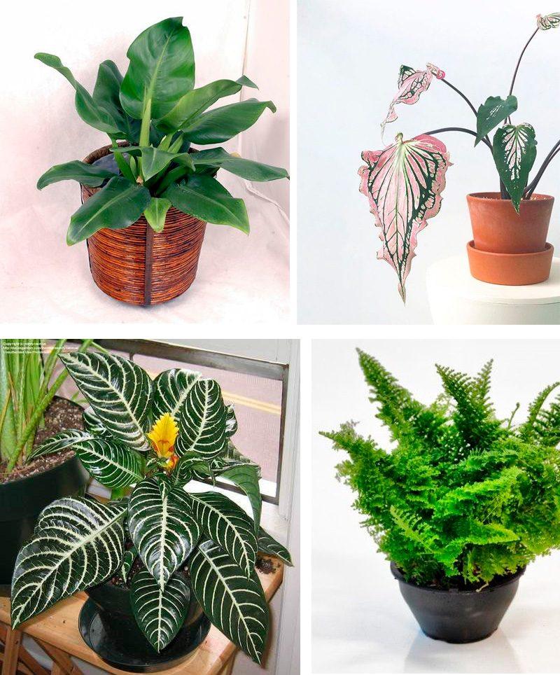 plantas para banheiros com pouca luz