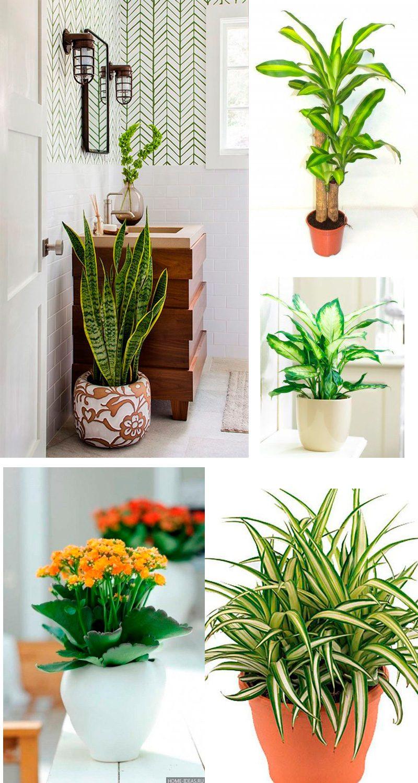 plantas para banheiros com muita e pouca luz